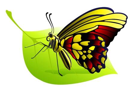 originalidad: mariposa en una hoja Vectores