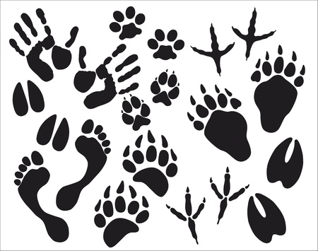 hunting dog: traces Illustration