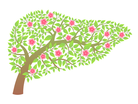 bile: Human liver healthy Illustration