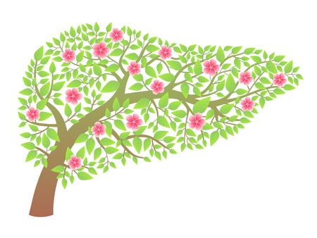 Human liver healthy Illustration