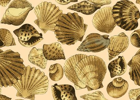 Seashells. Seamless background Illustration