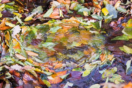maelstrom: leaves maelstrom in forest Stock Photo