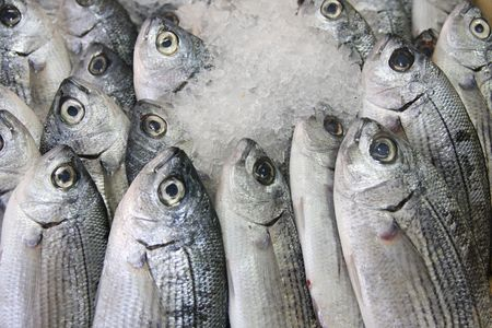 commercial fisheries: Fresh fish on ice decorated for sale at market