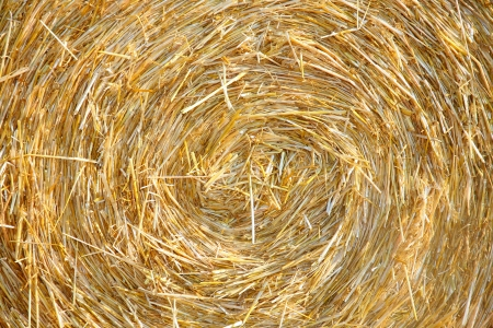 Detials close up shot of Wheat Haystack in farmer field photo