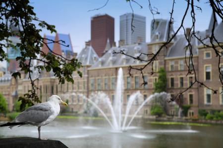 Seagull standing on a pillar, Binnenhof Palace, Dutch Parlament in the Hague, Netherlands