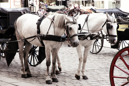 main gate: Couple Horse-drawn carts waiting for tourists at the main gate to Hofburg Palace in Vienna, Austria