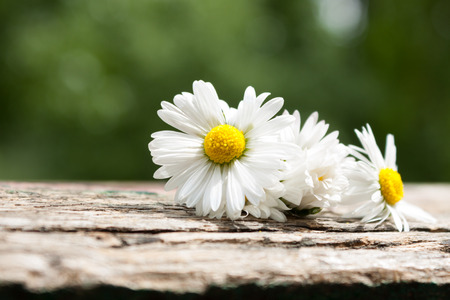 bouquet of daisy flowers against nature background summer garden background. Stock Photo