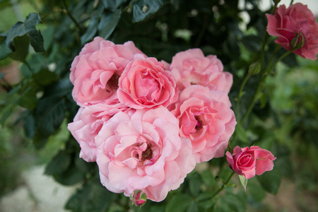 beautiful garden flowers Stock Photo