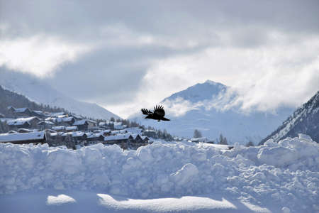 Beautiful winter scenery of the Italian Alps ski village Livigno with a bird flying on foreground 写真素材