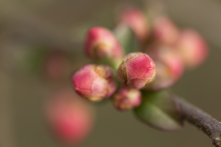 bough: The first spring gentle leaves, buds and branches. Macro background Stock Photo