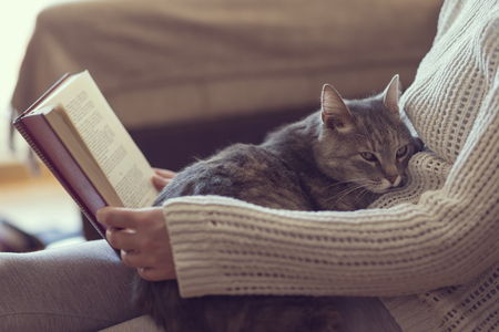 grey cat: Soft cuddly tabby cat lying in its owners lap enjoying and purring while the owner is reading a book. Focus on the cat; warm, cozy, domestic atmosphere