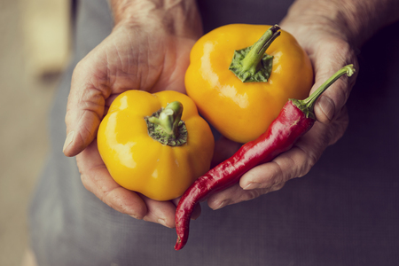 woman's hands: Top view of wrinkled womans hands holding a handful of yellow bell pepper and sweet pointed pepper. Selective focus Stock Photo