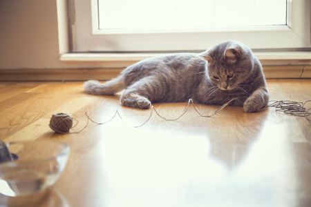 purring: Beautiful playful tabby cat lying on the living room floor, playing with a ball of string