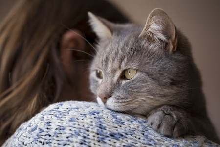 purring: Detail of a beautiful soft tabby cat lying on its owners shoulder and purring. Selective focus