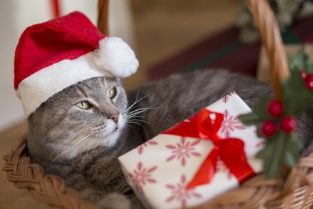 Beau chat tigré portant le chapeau du père Noël, couché dans un panier sous le sapin de Noël avec bouquet de cadeaux Banque d'images - 88144474