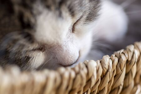 Detail of a cute grey and white baby cat sleeping in a wicker basket