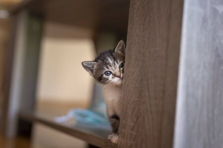 Playful baby cat exploring the world around it, climbing the coffee table shelf at home and peeking Stock fotó