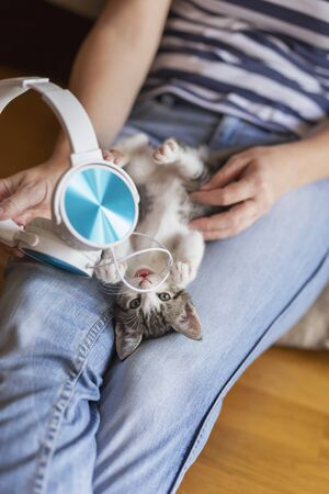 Top view of a woman holding and cuddling beautiful little grey and white kitten in her lap; kitten playing with a headset, listening to music Stockfoto