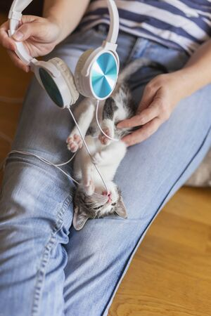 Top view of a woman holding and cuddling beautiful little grey and white kitten in her lap; kitten playing with a headset, chewing cords and listening to music Stockfoto
