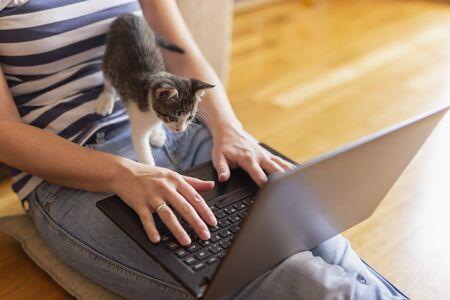 Woman working on her laptop at home with her cat as an assistant; woman working remotely from home and playing with her pet kitten Stockfoto