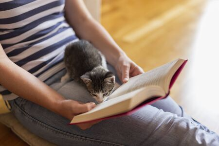 Soft cuddly kitten lying in its owners lap enjoying and purring while the owner is reading a book in a warm, cozy, domestic atmosphere