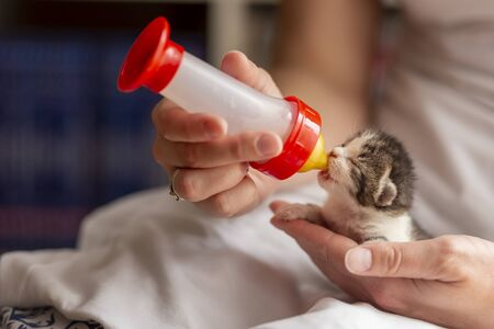 Female hands holding an orphan newborn kittlen, bottle-feeding it with baby cat formula