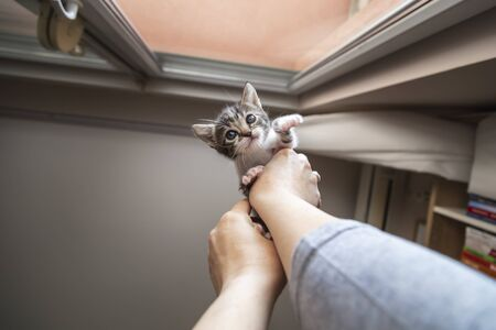 Woman playing with a cute white and grey kitten