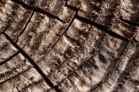 Macro top view detail of old tree stump texture with growth rings