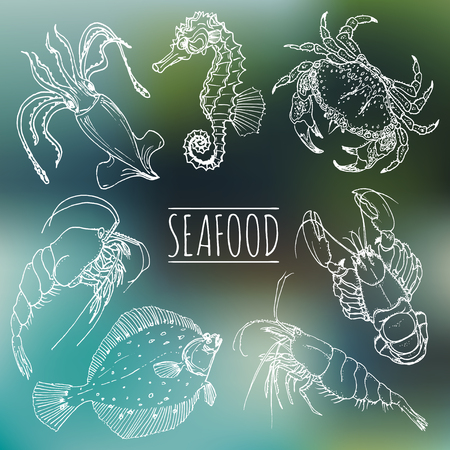 plaice: Vector vintage seafood sketches collection. Hand drawn fish illustrations for restaurant.