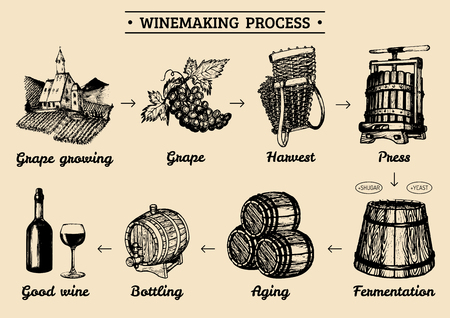 Vector grape infographics with illustrations of winery process. Sketched drawings of vine-making operations elements.