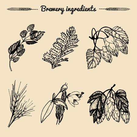 Vektorsatz Weinlesekräuterelemente der Brauerei Hand skizzierte Betriebsillustrationen für Bierbar, Restaurantmenükonzepte