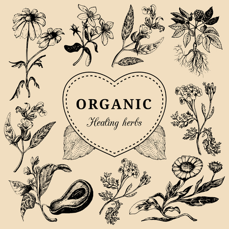 officinalis: Hand drawn vector herbs. Officinalis, medicinal, cosmetic plants sketched illustration. Vintage floral card or poster.
