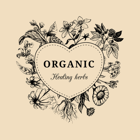 calendula: Hand drawn vector herbs. Officinalis, medicinal, cosmetic plants sketched illustration. Vintage floral card or poster.
