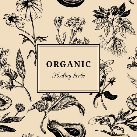 yarrow: Hand drawn vector herbs. Organic healing plants background. Vintage floral card or poster.