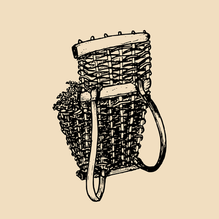 winemaking: Grape basket illustration. Vintage vector drawing of shoulder harvesting corf, wicker. Hand sketched winemaking element.