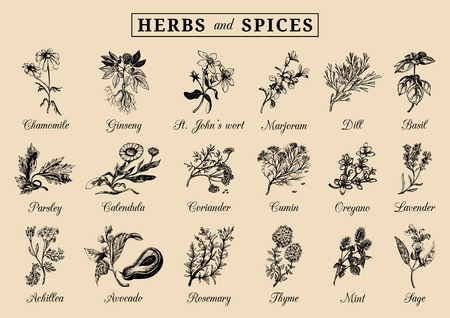 Herbs and spices set of hand drawn officinalis, medicinal, cosmetic plants. Vettoriali