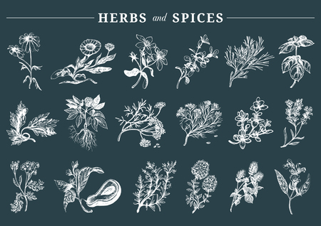 Disegnati a mano officinalis, medicinali, piante cosmetiche, erbe e spezie impostato.
