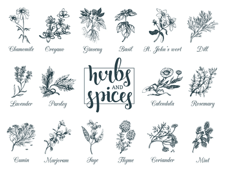 Herbs and spices set. Hand drawn officinalis, medicinal, cosmetic plants. Botanical illustrations for tags. cards etc.