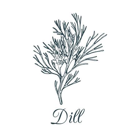 Vector dill illustratie geïsoleerd. Hand tekenen smaakstof plant schets. Botanische kruidenkaart. Tekentekening voor markering.