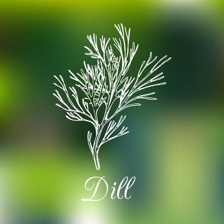 leaf logo: Vector dill illustration on blurred background. Hand drawn sketch of spice plant. Botanical drawing of aromatic herb. Fennel isolated. Illustration