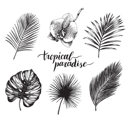 Vector vintage palm leaves illustration. Tropic paradise lettering with hand drawn collection of jungle foliage, flower. Illustration