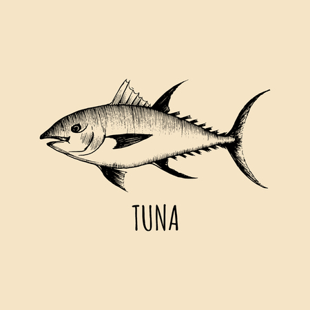 Vintage fish illustration in engraving style. Vector hand sketched tuna for logotype, label etc Illustration