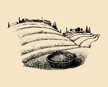 벡터 차 필드 그림입니다. 언덕, 농가, 바구니에 농장이있는 남부 시골의 스케치.