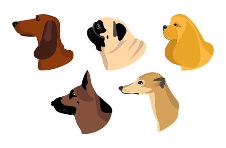 Dogs icons in flat style. Vector set of Dachshund, Husky and other breeds.