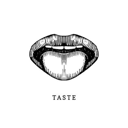 Hand drawn icon of human sense of taste in engraved style. Vector illustration of mouth and tongue Vettoriali