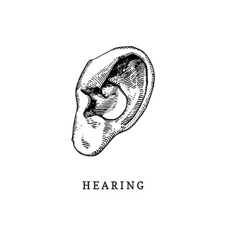 Hand drawn icon of human sense of Hearing in engraved style. Vector illustration of mans Ear Illustration