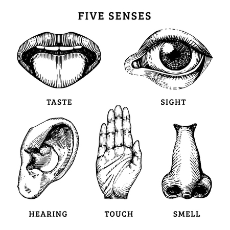 Icons set of five human senses in engraved style. Vector illustration of sensory organs
