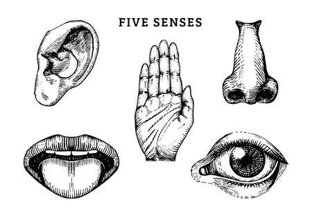 Conjunto de iconos de cinco sentidos humanos en estilo grabado. Ilustración de vector de órganos sensoriales