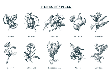 Drawn spices and herbs vector set. Botanical illustrations of organic, eco plants. Used for farm sticker,shop label etc.