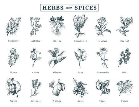 Drawn herbs and spices vector set. Botanical illustrations of organic, eco plants. Used for farm sticker,shop label etc. Banco de Imagens - 103819686